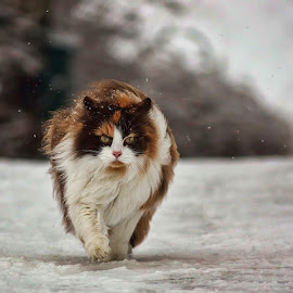 Windy winter day by Jane Bjerkli - Animals - Cats Portraits