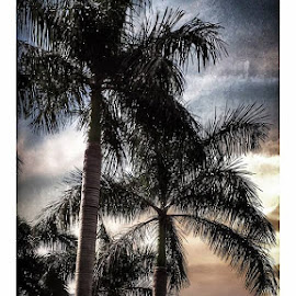 Palms and sky by Pablo Barilari - Landscapes Weather