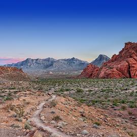 Desert Path by Will D'angelo - Landscapes Deserts ( desert, sunset, beautiful, path, nature, landscape )