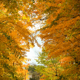 Autumn Colors by Craig Kasseckert - City,  Street & Park  Street Scenes ( fall colors, autumn, fall, trees, road,  )