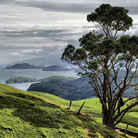 Coromandel  by Tim Bennett - Landscapes Travel ( coromandel, new zealand, north island,  )