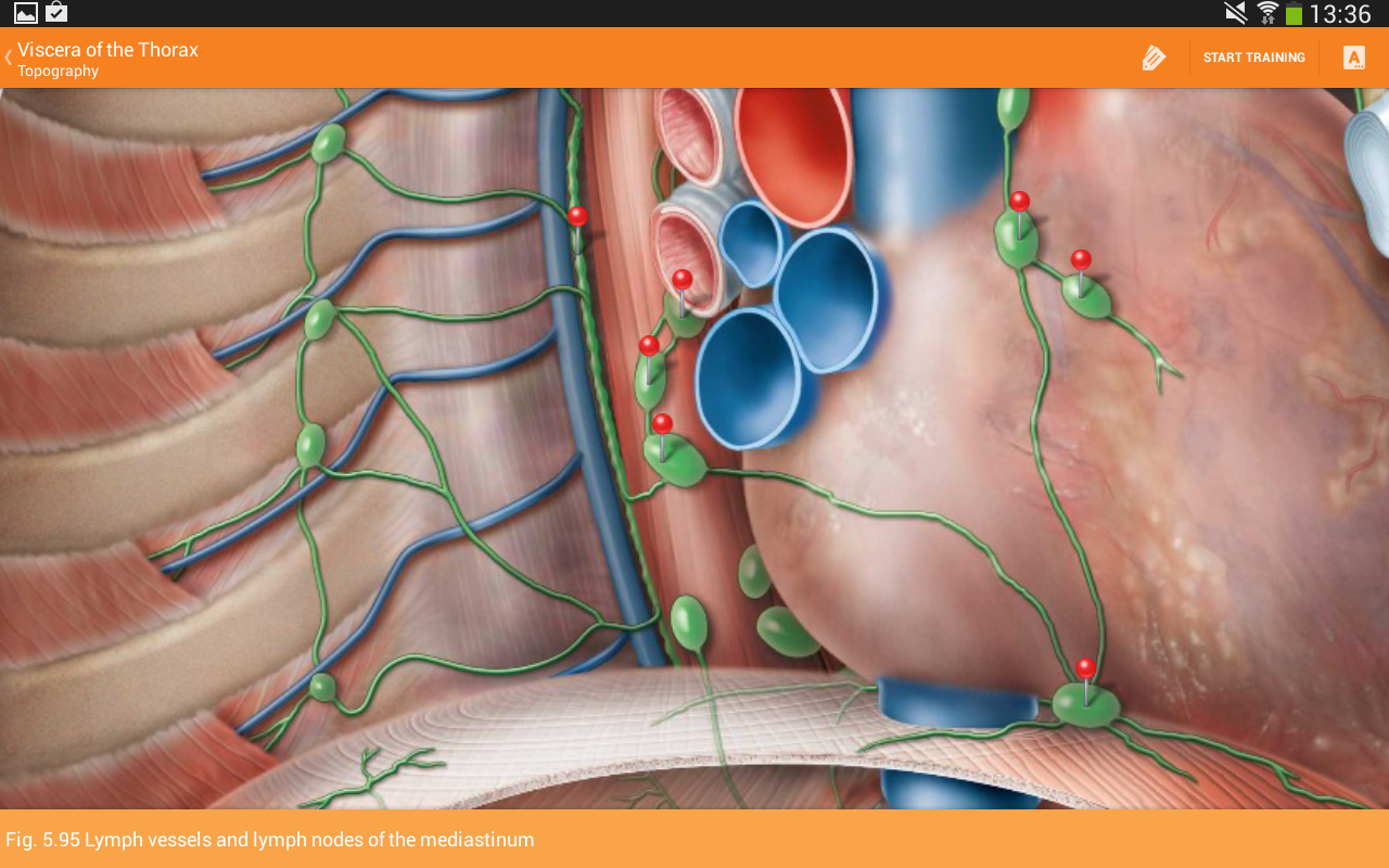 Sobotta Anatomy Atlas Screenshot 8