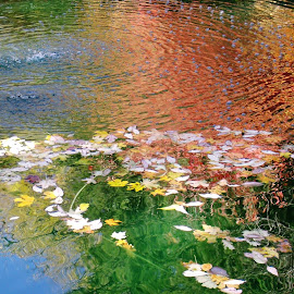 Reflection in a fountain by John Marcum - Nature Up Close Water