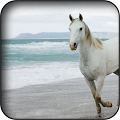 Horse wallpapers APK for Bluestacks