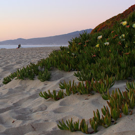 Watching Sunset by Sanjib Paul - Nature Up Close Other plants ( sand, bay, green, sunset, halfmoon bay, sea shore )