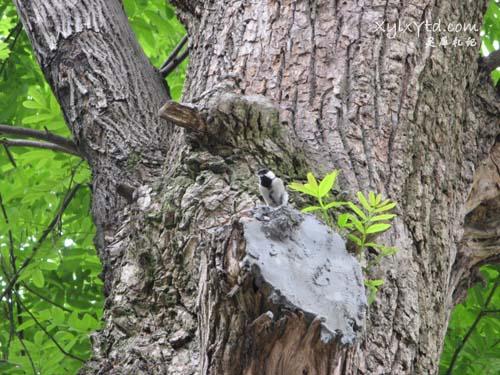 元宝树,小鸟