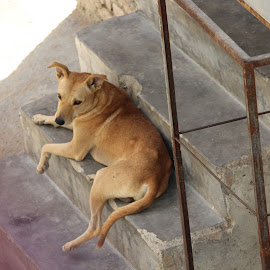 Do not enter in my home. by Sanam Ahmed Khan - Animals - Dogs Portraits ( doggy, quite, waiting, beware, security, dog )