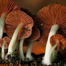 serangan jamur by Wartono Kumpulono - Nature Up Close Mushrooms & Fungi