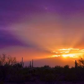 Apache Junction AZ. by Richard Grzych - Landscapes Deserts