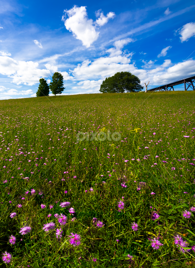 One Less Tree by Sergio Smiriglio - Landscapes Prairies, Meadows & Fields ( viaduct, sony a7, cornwall, trees on a hill, mountainville, sergio smiriglio, salisbury mills, field of flowers )