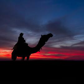 Camel Drover by Manuj Mehta - Landscapes Travel ( camel, jaisalmer, dunes, manuj mehta, sunset, silhouette, rajasthan, camel drover, india, deserts, colours, , Earth, Light, Landscapes, Views )