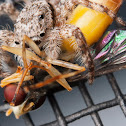 Spider BG417 (Ha ha ha)
