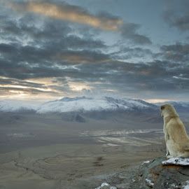 Himalayan Dog by Rob Taylor - Animals - Dogs Portraits ( himalayan, mountain, nature, travel, dog )