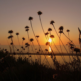 Sunset of flowers by Gil Reis - Landscapes Sunsets & Sunrises ( beaches, sky, nature, sunset, sea, travel, portugal,  )