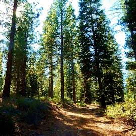 Rim Trail by Samantha Linn - Landscapes Forests