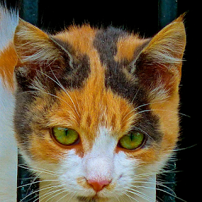 by Laura Payne - Animals - Cats Portraits ( face, safe, orange, cat, queen, green, cell, white, front, tortoiseshell, female, guard, tortie, she, whisker, pink, brown, grey, bar, feline, black, animal,  )