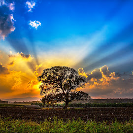 Burning Bush by Assi Dvilanski - Landscapes Sunsets & Sunrises ( tree, sunset, sunrays, meadow, burning bush, sun )