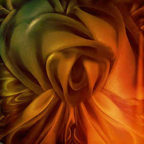 MIDNIGHT ROSE by Carmen Velcic - Digital Art Abstract ( abstract, orange, roses, gold, flowers, digital )