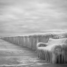 Frozen bridge by Lupu Radu - Black & White Buildings & Architecture ( black sea, ice, romania, bridge, constanta, mamaia, public, bench, furniture, object,  )