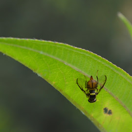 bug me by Casterino Rio - Novices Only Macro ( plant, green, maco, insect, garden )