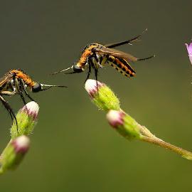 anthuk anthukan by Wartono Kumpulono - Animals Insects & Spiders