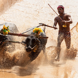 The Kambala by Russell Dmello - Sports & Fitness Other Sports