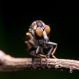 by Debab Guci - Novices Only Macro (  )