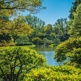 by Matt Meyers - City,  Street & Park  City Parks ( st louis, water, japanese gardens, lake, garden, missouri botanical garden )