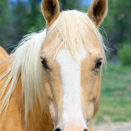 Blonde by Hylas Kessler - Animals Horses