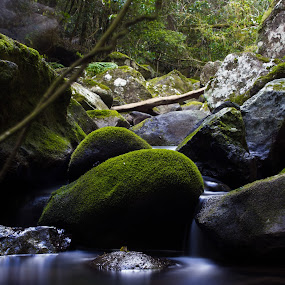Cold feet by Ty Hanson - Landscapes Forests ( mountain water australia brisbane photography finchzero )
