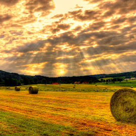 by Paulo Soares - Landscapes Prairies, Meadows & Fields ( desert, sunset, green, summer, july, forest, landscape,  )
