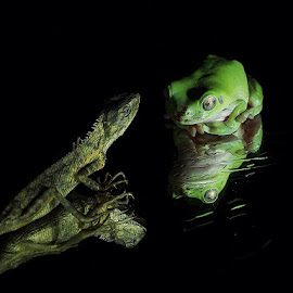 Who Are You? by Thomas Wiwiek Widyarsono - Animals Amphibians ( lizard, frog, amphibi, reptile )