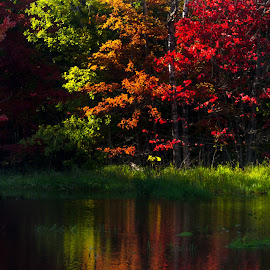 Autumn,Sunlight,and Reflection by Gary Hanson - Nature Up Close Trees & Bushes ( reflection, tres, spider lake, sunlight, elements, combined )