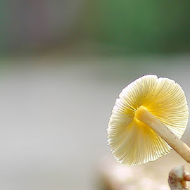 by Simon Yue - Nature Up Close Mushrooms & Fungi
