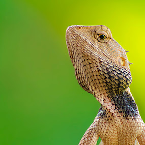 Curious look by Rahul Chakraborty - Animals Reptiles