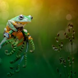 I am Waiting For You.... by Vincent Sinaga - Animals Amphibians ( frog, waiting, amphibian, flying frog, animal )