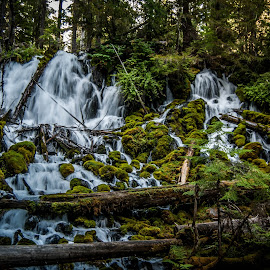 Clearwater Falls by Judah Kelly - Landscapes Waterscapes ( oregon, mountains, nature, hdr, waterscape, green, waterfall )