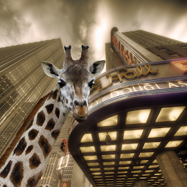 City Giraf by Huub Keulers - Digital Art Animals ( building, giraf, city, animal,  )