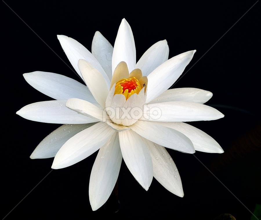 by Cheefui Chin - Flowers Single Flower