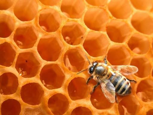 http://4.bp.blogspot.com/_cpKHGqBVuL8/SOpy-49g_BI/AAAAAAAAAjc/y2PdRCCmTS0/s400/abeille_ruche.jpg