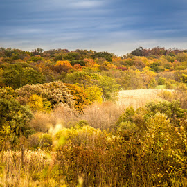 Autumn Color by Shari Brase-Smith - Landscapes Prairies, Meadows & Fields ( autumn, fall, colored leaves, scenic, fields )
