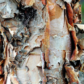 Tree Bark by Dennis McClintock - Nature Up Close Trees & Bushes ( texture, nature up close, natural oddities challenge, tree trunk, tree bark,  )
