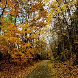 by Thomas Polk - Landscapes Forests ( ohio, photo stream, fall, color, colorful, nature )