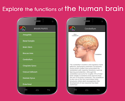 Screenshot of HUMAN BRAIN (PARTS-FUNCTIONS)