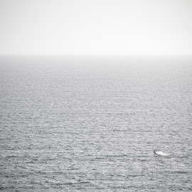 Lone Windsurfer by Paul Clark - Sports & Fitness Watersports ( water, wind, black and white, kite, sea, ocean, coast, wetsuit, boards, kite surfer, surfer, water sports, man )