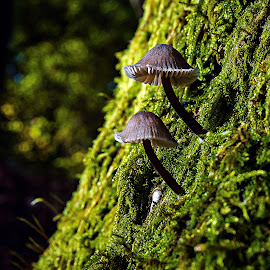 Spiky. by Miguel Silva - Nature Up Close Mushrooms & Fungi ( miguel silva, moss, forest, viseu, portugal, fontelo, spiky, mushrooms, , mushroom, nature, natural )