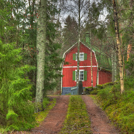 All is Green by Bojan Bilas - Buildings & Architecture Homes ( naantali, buildings, finland, forest, architecture, homes,  )
