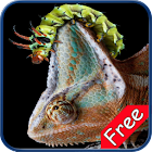 Chameleon+ Free icon