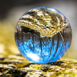 Mossy Reflection by Holly Stokes - Artistic Objects Other Objects ( reflection, tree, crystal ball, mossy tree, moss, forest )