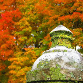 by Dyan Brisson - Artistic Objects Other Objects ( fall, color, colorful, nature )